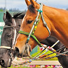 Emerald Downs 2011 :